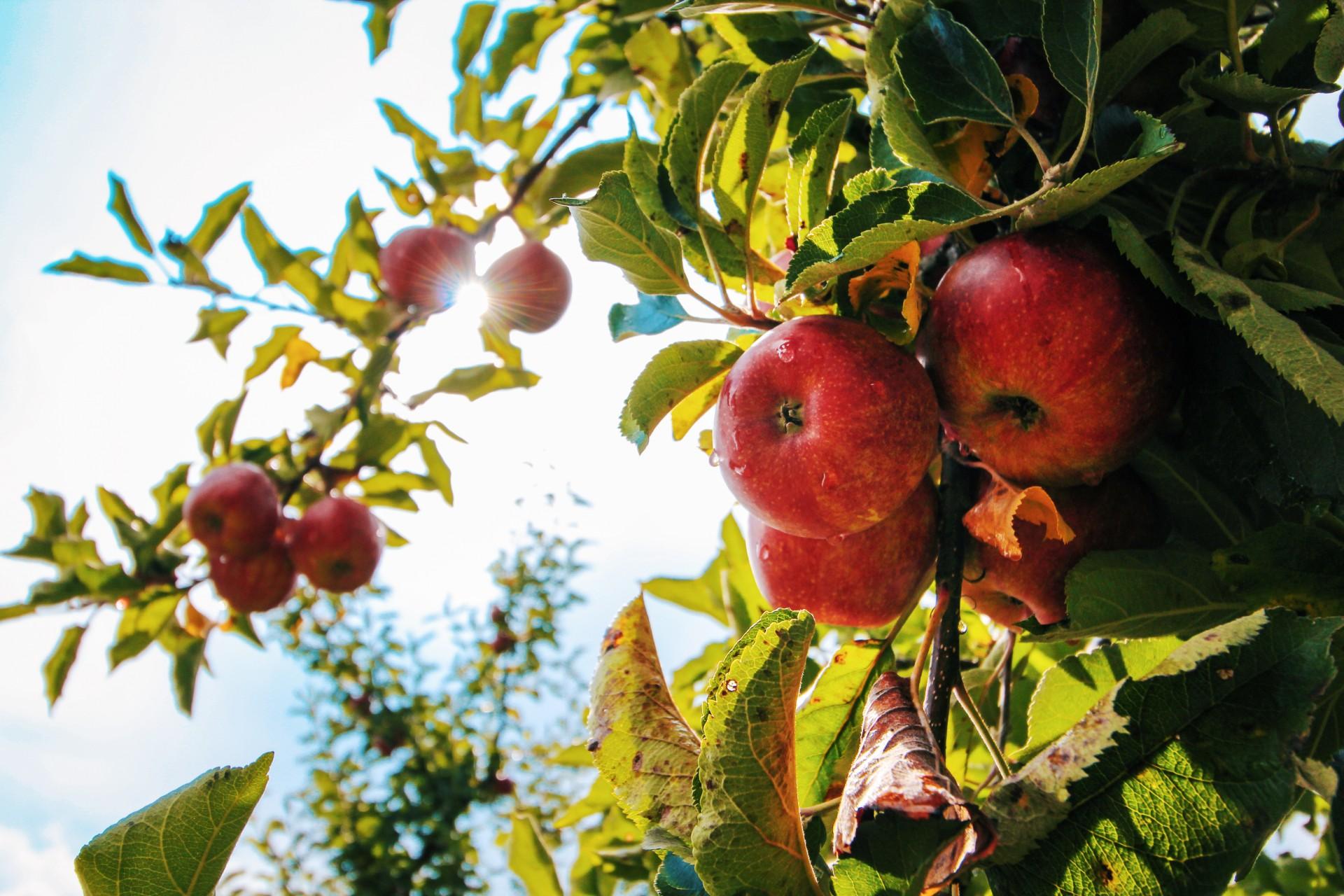 Contaminantes y pesticidas en los alimentos: ¿Cómo afectan la salud?