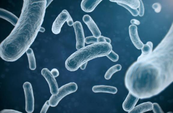 Erradicar las bacterias peligrosas puede causar daños permanentes en el cuerpo humano